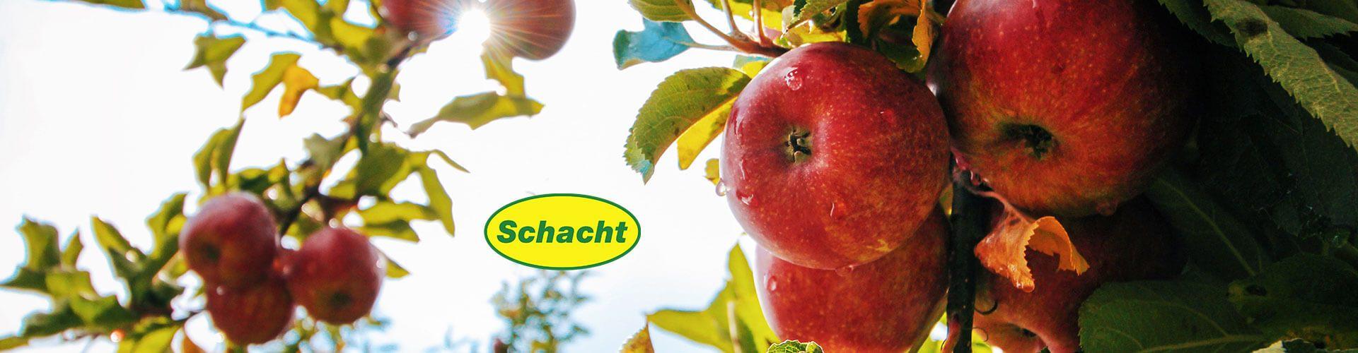 Schacht | Grama-trgovina